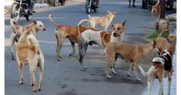 কুমিল্লায় পাগলা কুকুরের কামড়ে আহত ১৯, ভ্যাকসিন সংকট ফার্মেসিতে